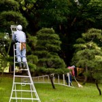植木剪定用具の使い方道具選びは重要です