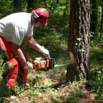 庭木の剪定にチェーンソーの必要なし