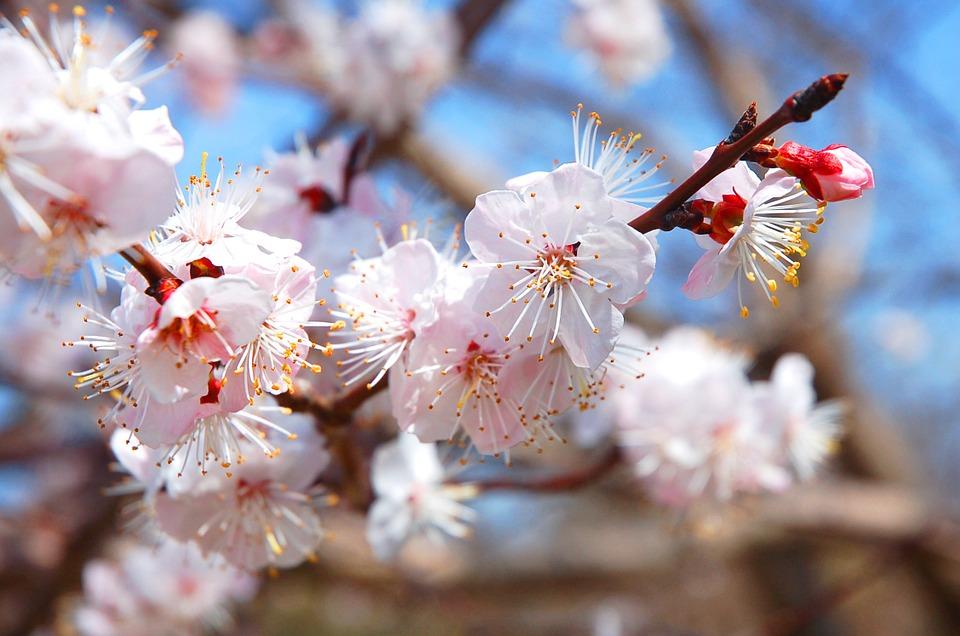 庭木の手入れ方法|花芽のできる時期を知って剪定
