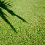 半日陰で育つ目隠しになる木は