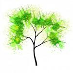 常緑樹のシンボルツリー日陰にも強い庭木は