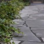 玄関横の植木・・・どんな木を植えればいいか