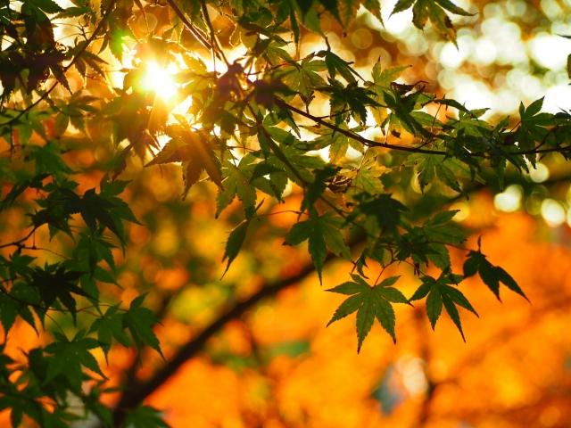 シンボルツリー西日に強い庭木の種類は