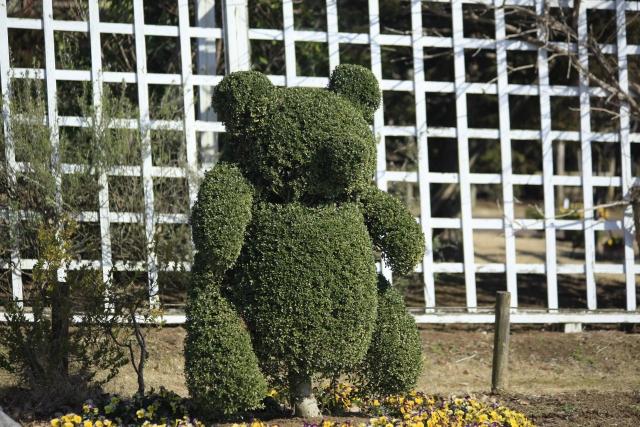 庭木で常緑樹で刈込みにも強いものは