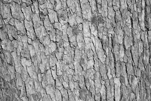 庭木の松くい虫の対策と防除方法は