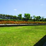 芝生で使える除草剤のおすすめはなに