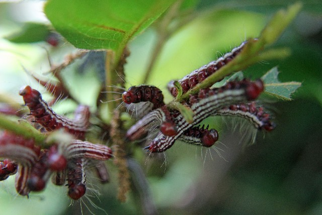 殺虫剤散布しない庭木の害虫の駆除方法ってあるの
