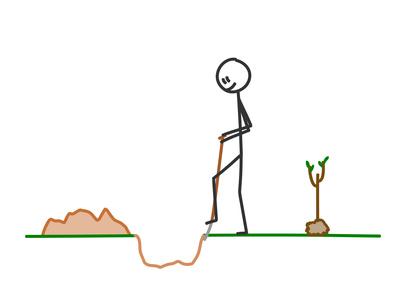 樹木の移植適期はいつ落葉樹と常緑樹