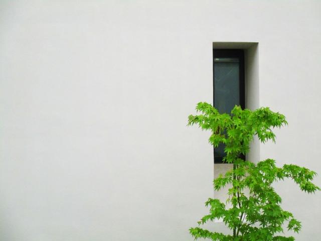 狭い庭に植えるシンボルツリーは何がいい