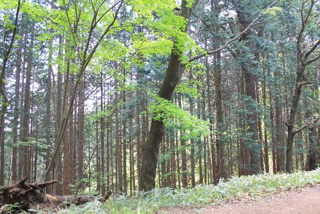 広葉樹と針葉樹の違い種類や特徴は