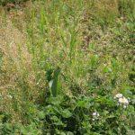 庭の雑草対策に砂利を敷く・防草シート・固める土・除草剤どれがいい