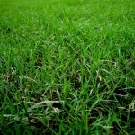 芝生の雑草対策にはどんな方法があるの