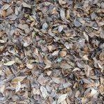 腐葉土と堆肥の違い庭木の肥料に使うのどちらがいい