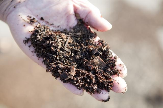 庭木の肥料の種類はどんな時にどんな肥料をやればいいの