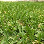 芝生の目土の時期と目土の土はどんな種類を使うの