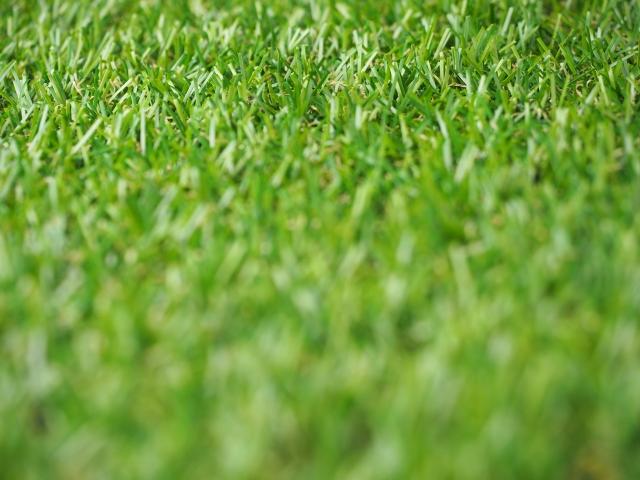 芝生の肥料のまき方や時期どんな肥料をどのくらいまくの