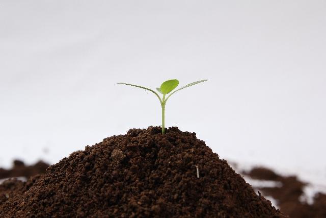 肥料の三要素とその役割と比率3要素が不足したり過多になると