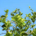 みかんの木につく害虫の駆除と時期について