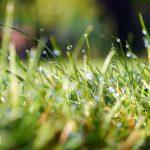 芝生の肥料の液体ってムラにならない