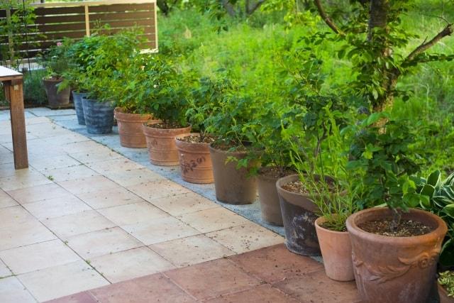 鉢植えと庭植えここが違うポイントは