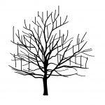 徒長枝ってどんな枝が知っていますか?