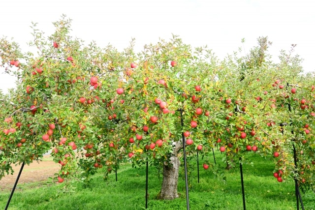 これでばっちり!果樹に与える寒肥