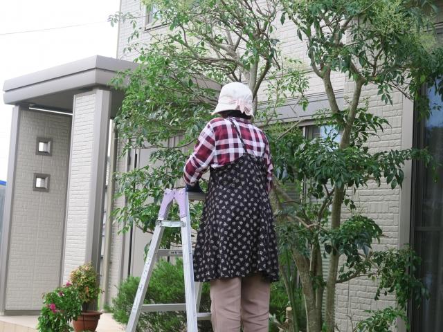 庭木に人気の常緑樹とその剪定時期