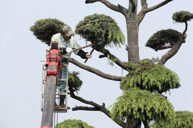 高くなりすぎた木の剪定方法や対処法は?伐採時期や手入れのポイント
